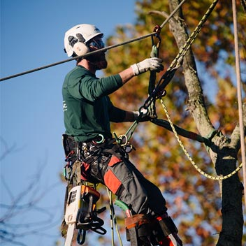 Employee hanging from ropes in tree